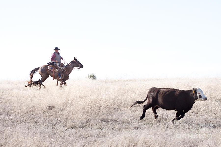 Cowboy Photograph - Cattle Drive by Cindy Singleton