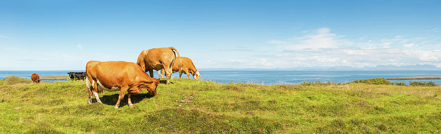Cattle Grazing In Picturesque Meadow Photograph by Fotovoyager