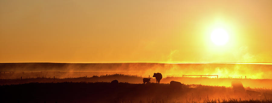 Cattle Silhouette Panorama Photograph by Imaginegolf