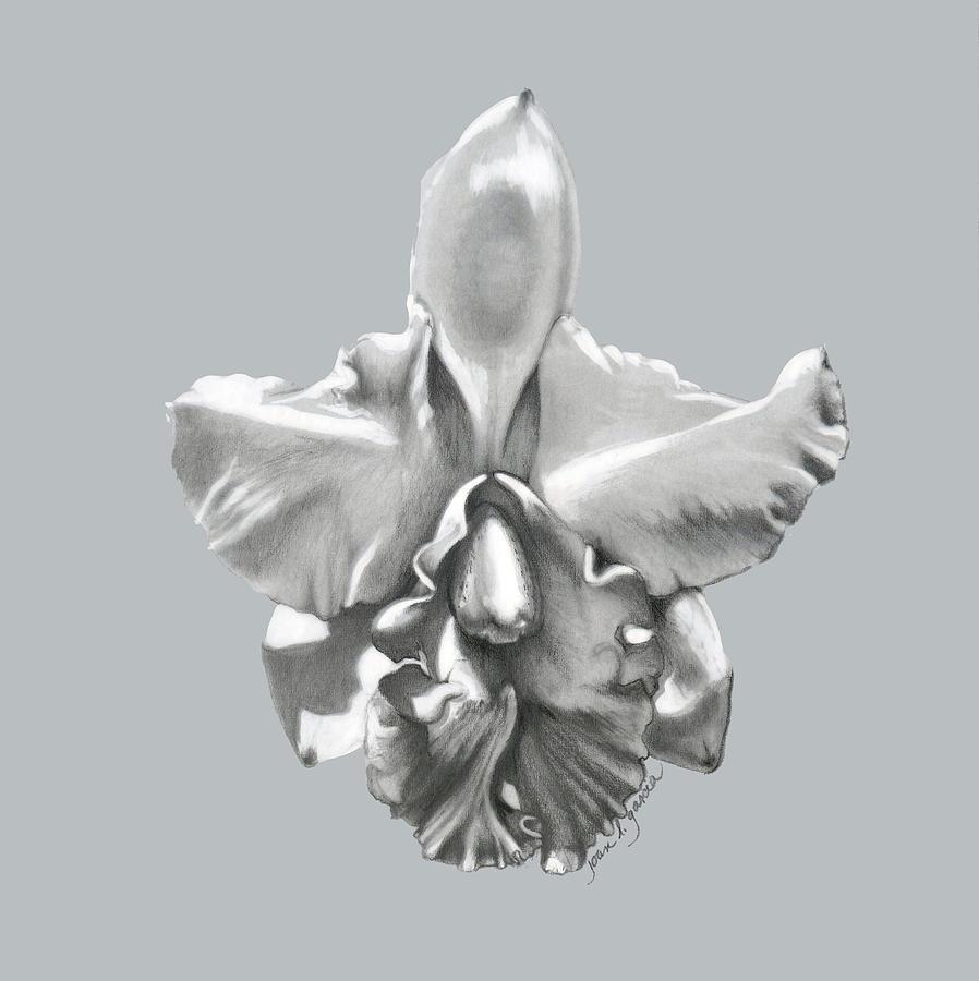 Orchid Drawing - Cattleya I - Sweet Dreams by Joan Garcia