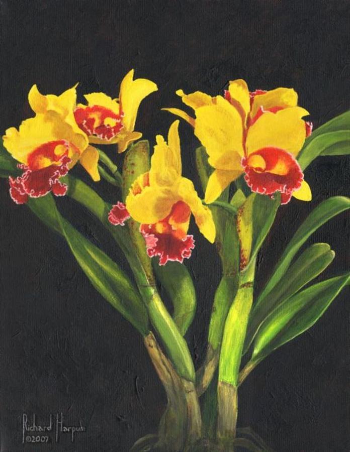 Flower Painting - Cattleya Orchid by Richard Harpum