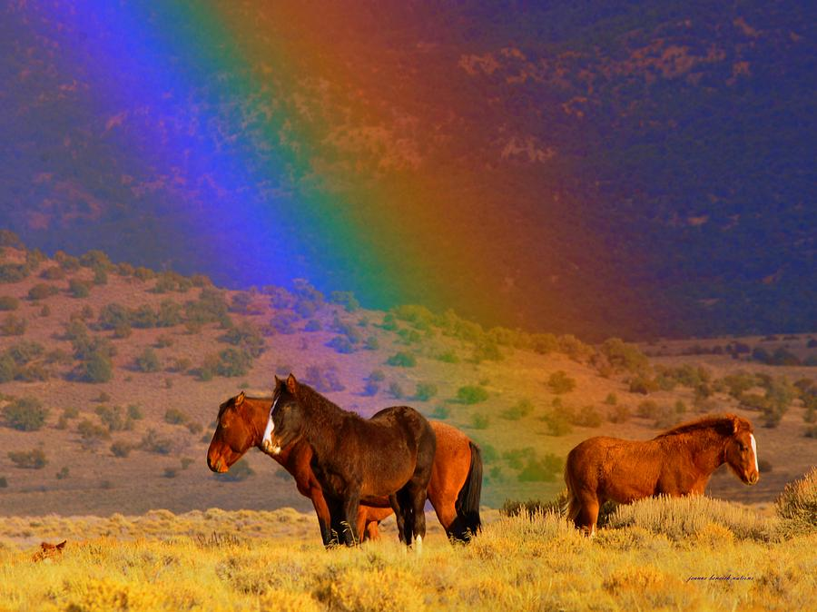 Wild Horses Photograph - Caught In A Rainbow  by Jeanne  Bencich-Nations