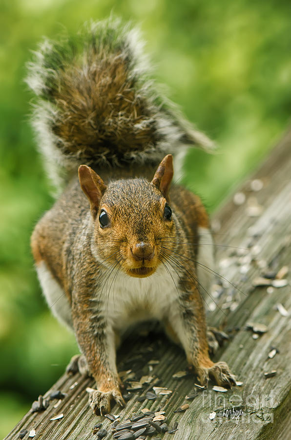 Squirrel Photograph - Caught In The Act by Lois Bryan