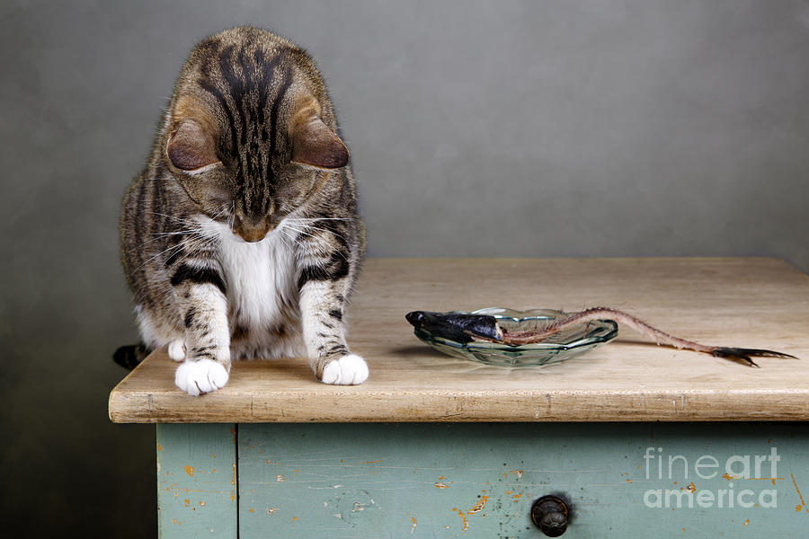 Cat Photograph - Caught In The Act by Nailia Schwarz