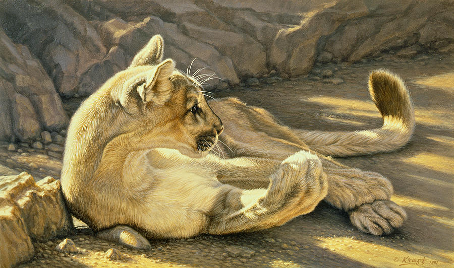Wildlife Painting - Caught Napping by Paul Krapf