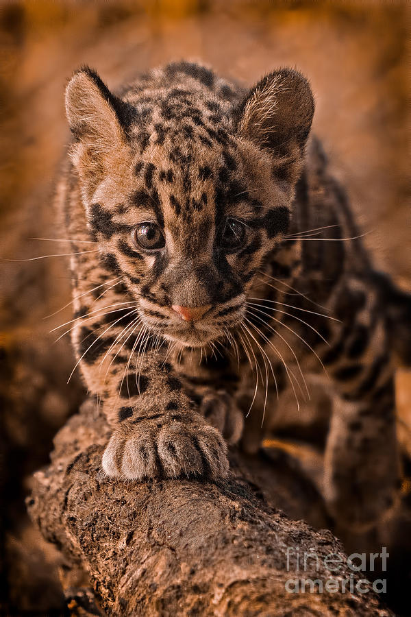 Adorable Photograph - Cautious Advance by Ashley Vincent
