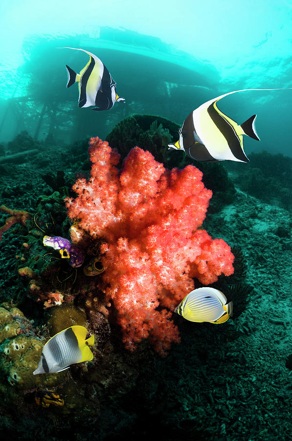 Ccoral Reef With Fish Photograph by Georgette Douwma