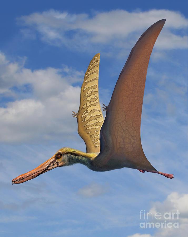 Výsledek obrázku pro Cearadactylus