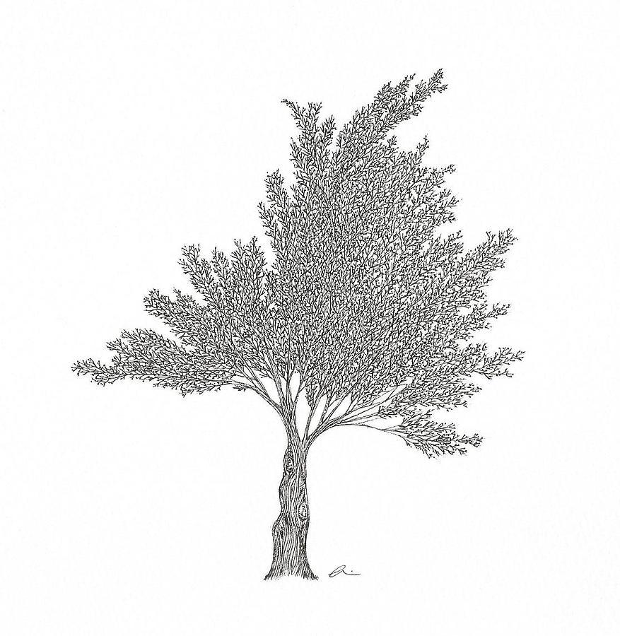 Cedar by Andrea Currie