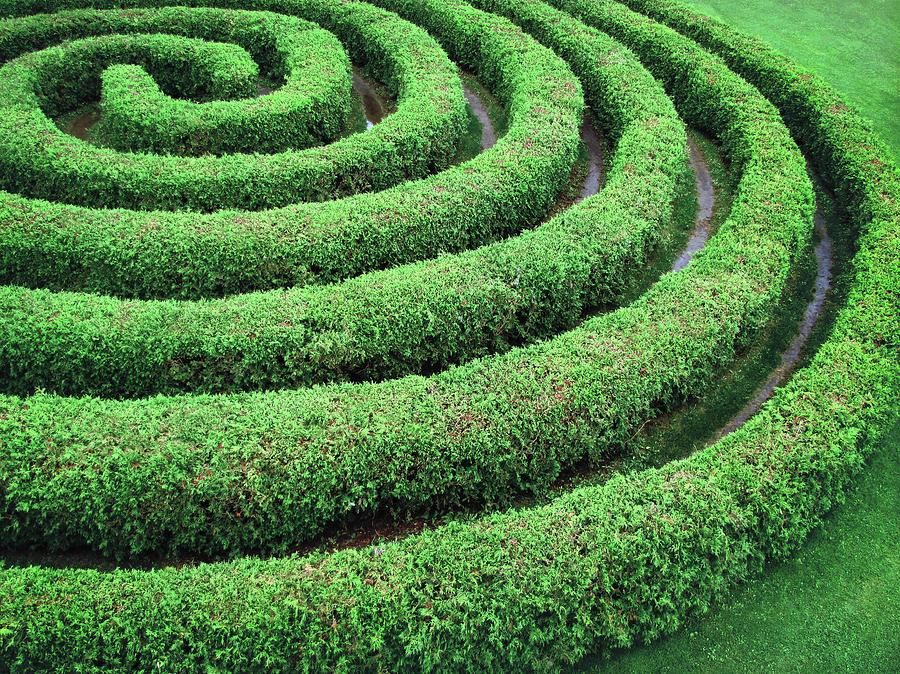 Cedar Maze Photograph by Francois Dion