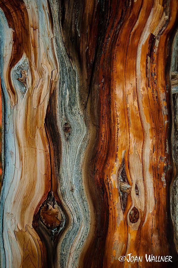 Bryce National Park Photograph - Cedar Texture by Joan Wallner