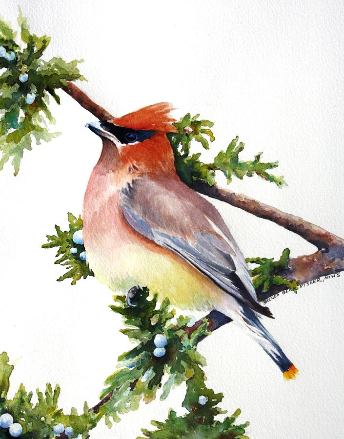 Cedar Waxwing Painting - Cedar Waxwing by Brenda Beck Fisher