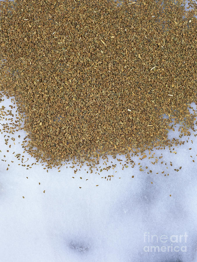 Food Photograph - Celery Seeds  by Geoff Kidd