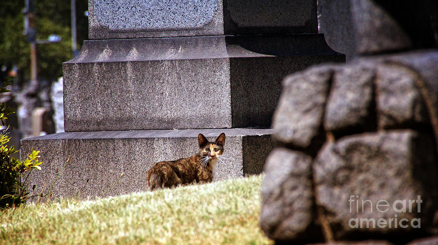 Cat Photograph - Cemetery Cat by Mark Thomas