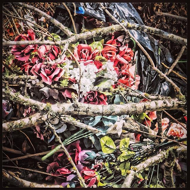 Cemetery Debris Photograph by Gia Marie Houck