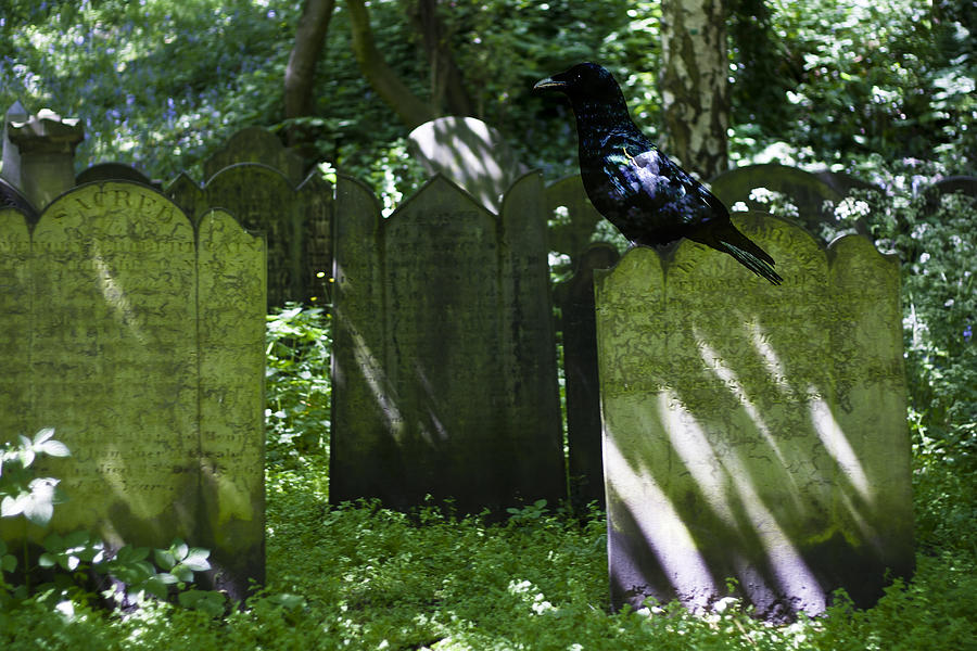 Graveyard Photograph - Cemetery With Ancient Gravestones And Black Crow  by Georgia Fowler
