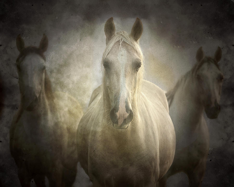 Equine Photograph - Center Of Attention by Ron  McGinnis