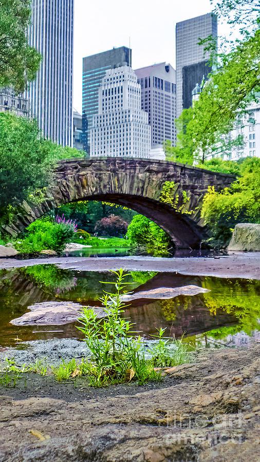 Central Park Nature Oasis Photograph