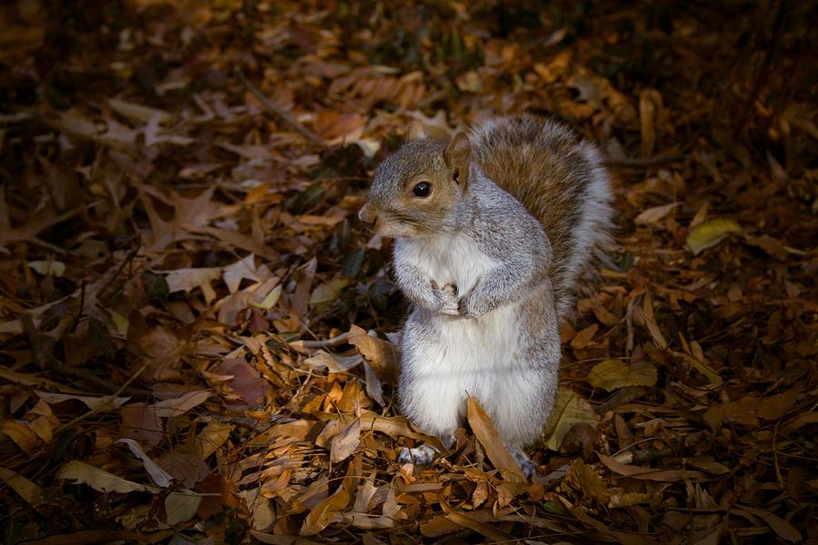 Nyc Photograph - Central Park Squirrel by Marta Grabska-Press
