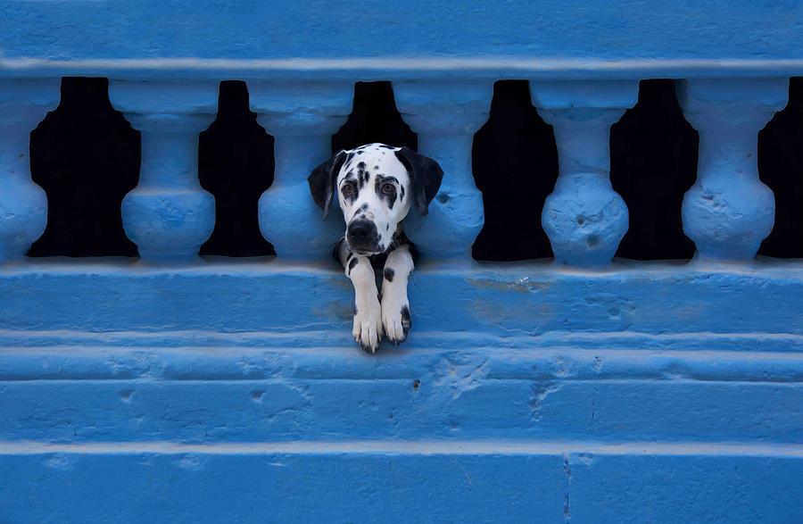 Dog Photograph - Centro Habana by Roxana Labagnara