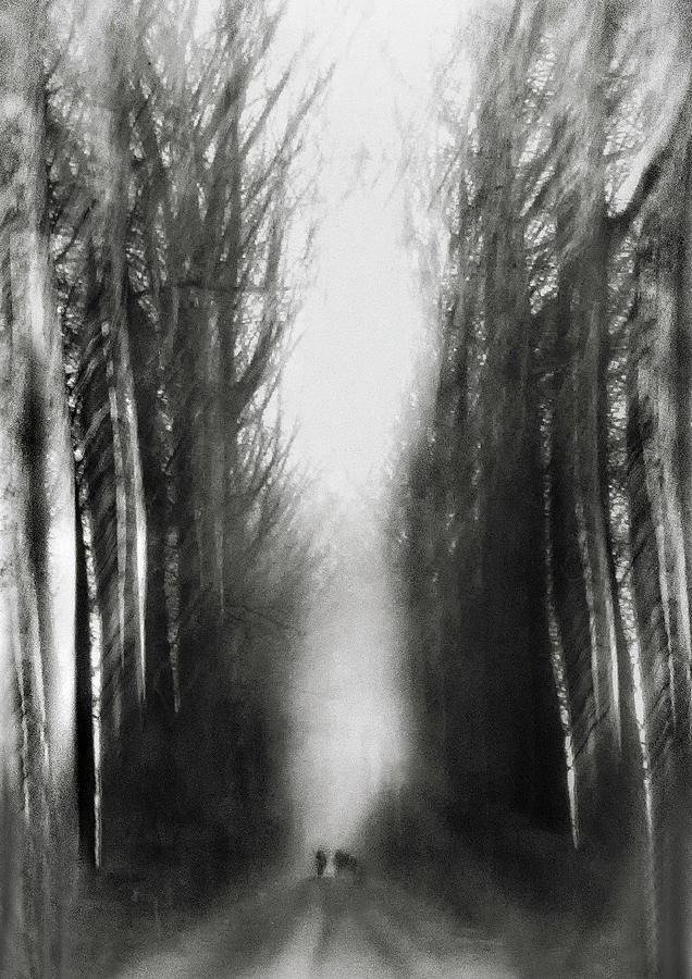 Trees Photograph - Cezannes Walk by Yvette Depaepe