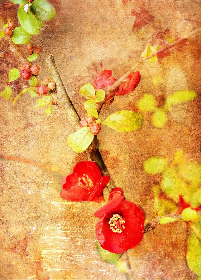 Chaenomeles by Helene U Taylor