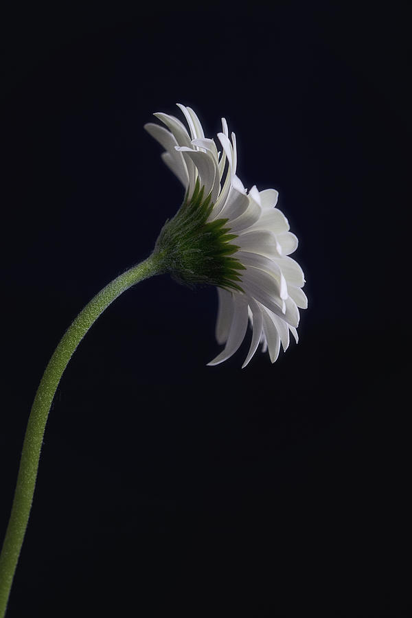 Still Life Photograph - Challenge by Kim Andelkovic