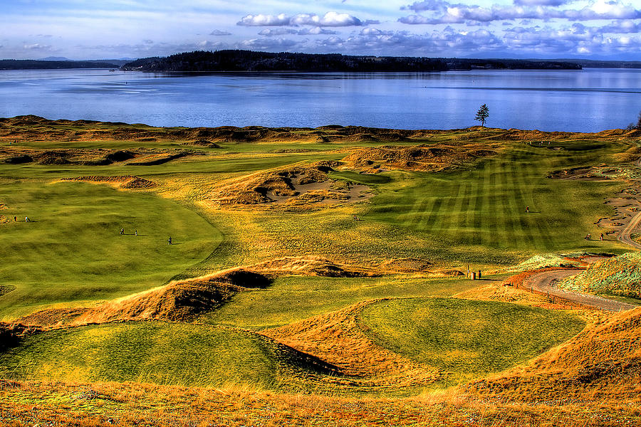 Chambers Bay Golf Course Photograph - Chambers Bay Lone Tree by David Patterson