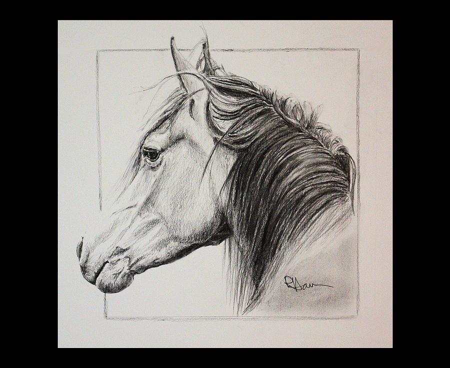 Horse Portrait Drawing - Champion by Rachel Hames