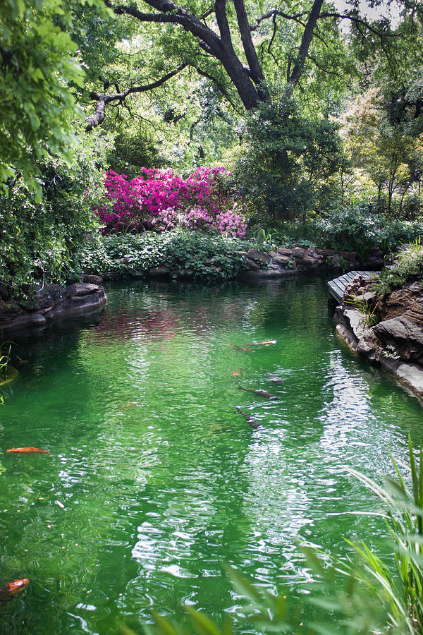 Weatherford Texas Photograph - Chandor Gardens by Lezlie Faunce