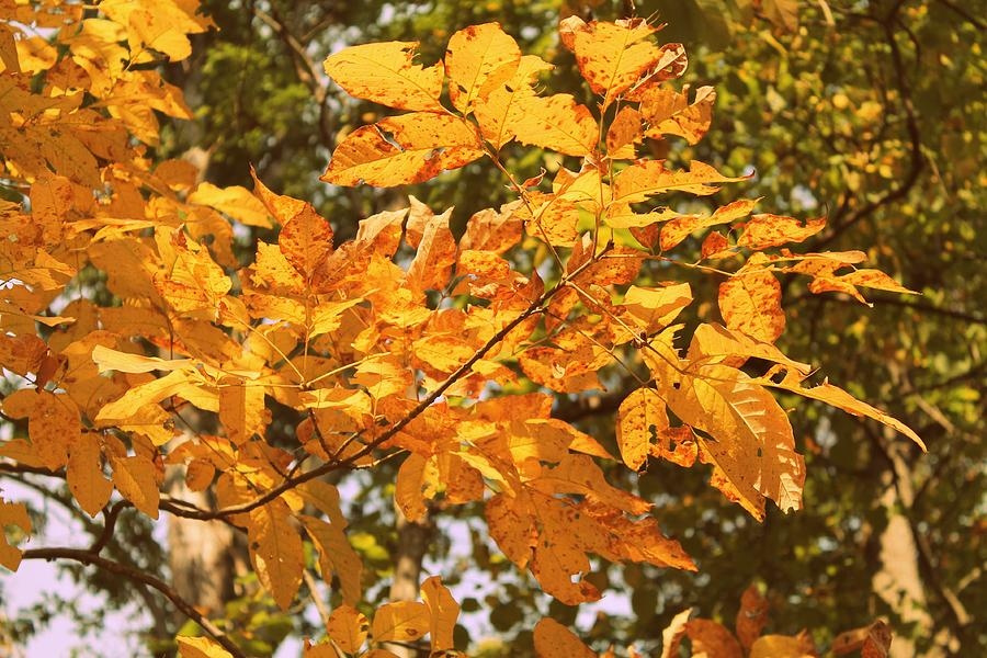 Leaves Photograph - Change is Good by Candice Trimble