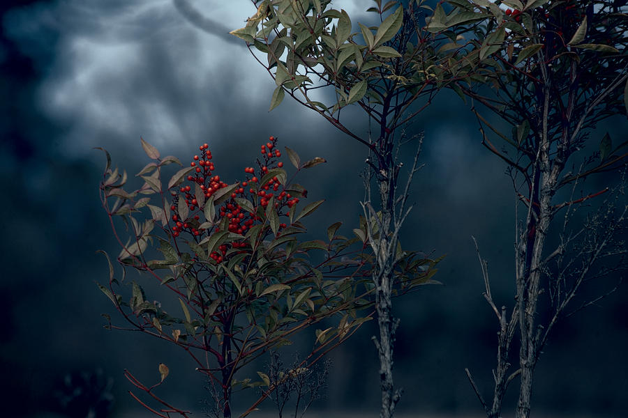 Nature Photography Photograph - Change Of Season by Bonnie Bruno
