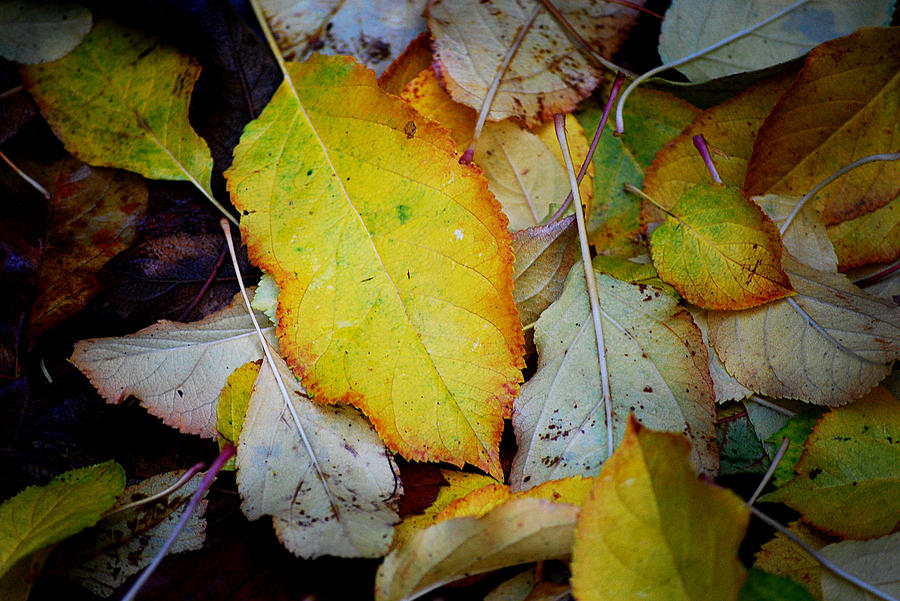 Autum Photograph - Change Of Season by Michelle Wrighton