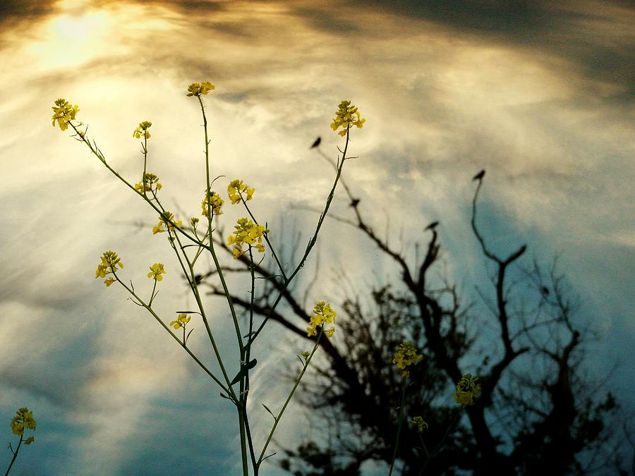 Cloudy Photograph - Changing Sky by Gothicrow Images