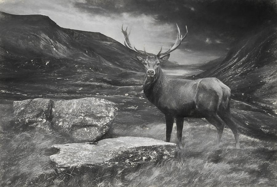 Charcoal Drawing Image Red Deer Stag In Moody Dramatic
