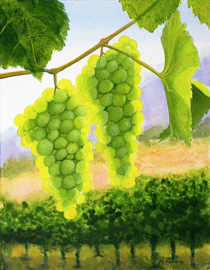 Chardonnay Painting - Chardonnay Grapes by Mike Robles