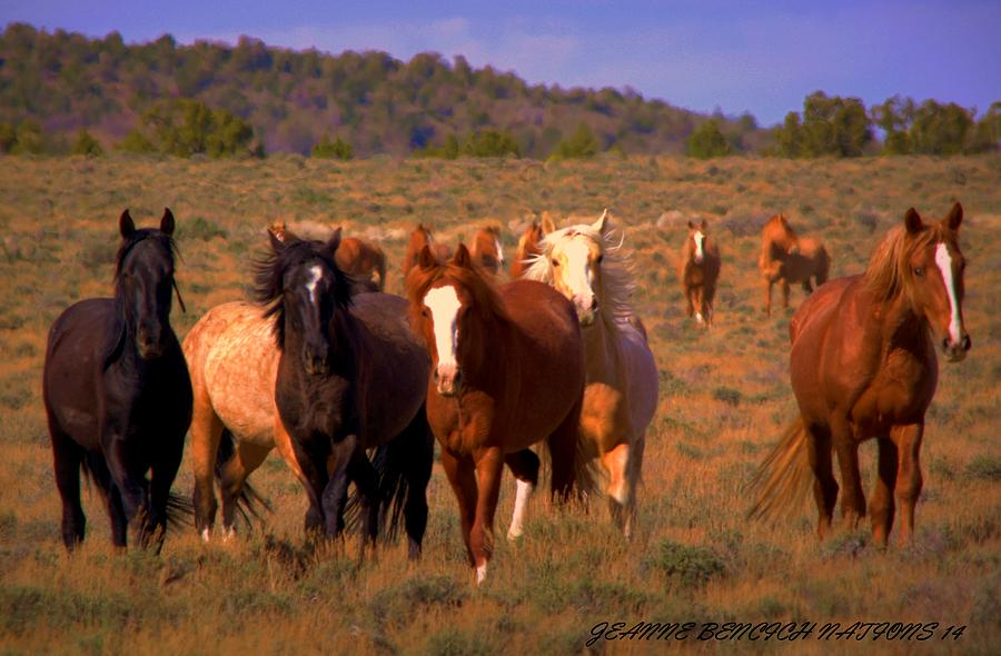 Wild Horses Photograph - Charge Of The Mustangs  by Jeanne  Bencich-Nations