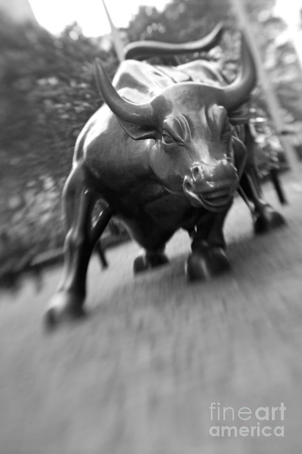 Wall Photograph - Charging Bull 2 by Tony Cordoza