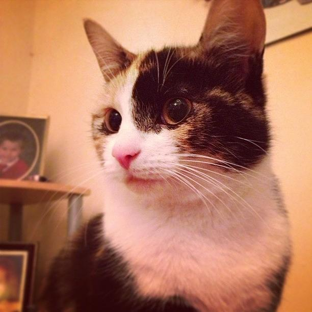 Animal Photograph - Charlee! #cat #cats #tagsforlikes by Charlotte Turville
