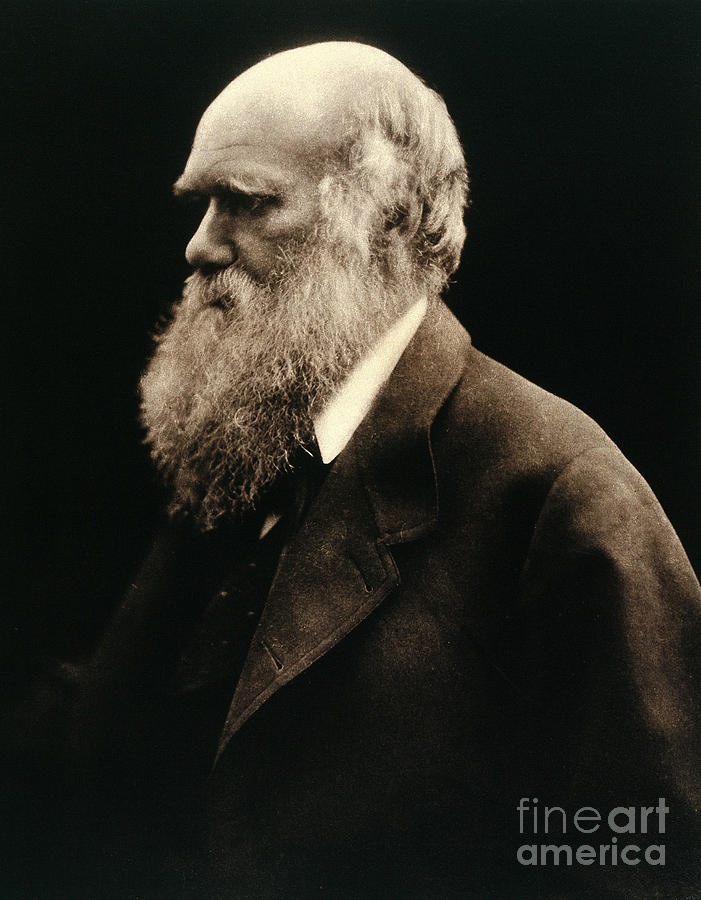 Historic Photograph - Charles Darwin By Julia Margaret by Wellcome Images