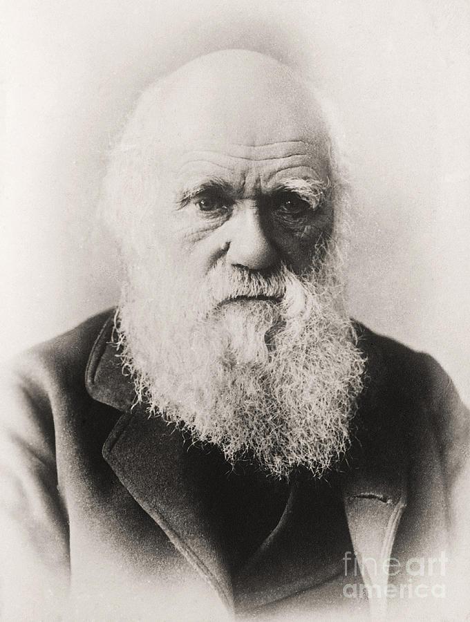 Beard Photograph - Charles Darwin by English School