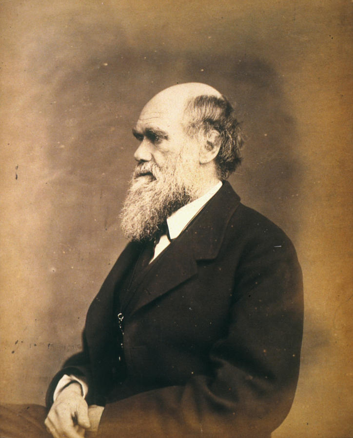 19th Century Photograph - Charles Robert Darwin (1809-1882) by Granger