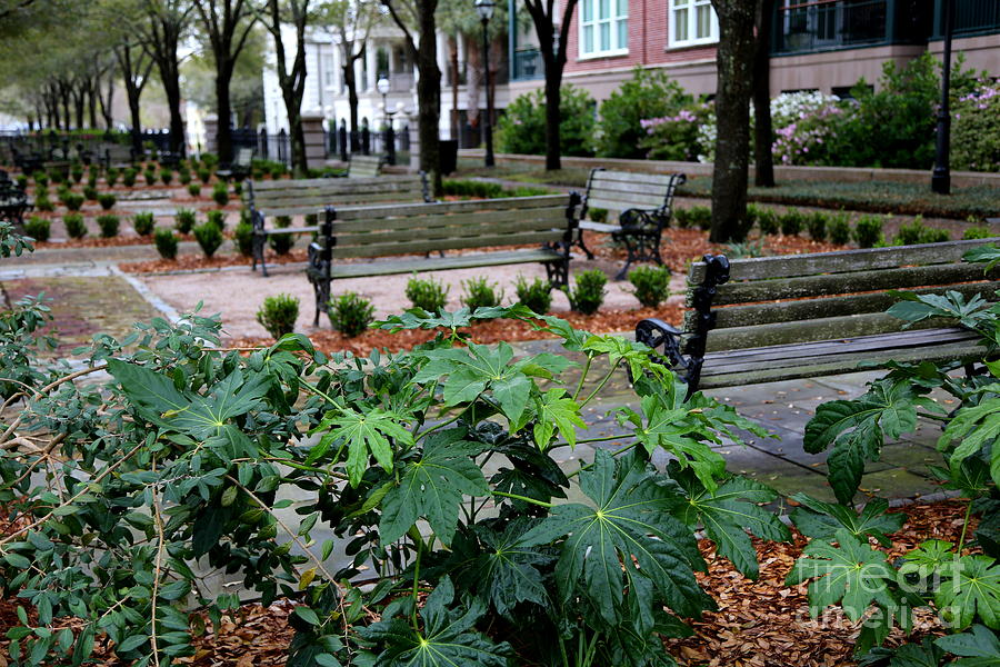 Charleston Photograph - Charleston Waterfront Park Benches by Carol Groenen
