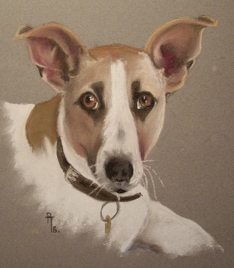 Dog Pastel - Charlie by Rosemarie Temple-Smith