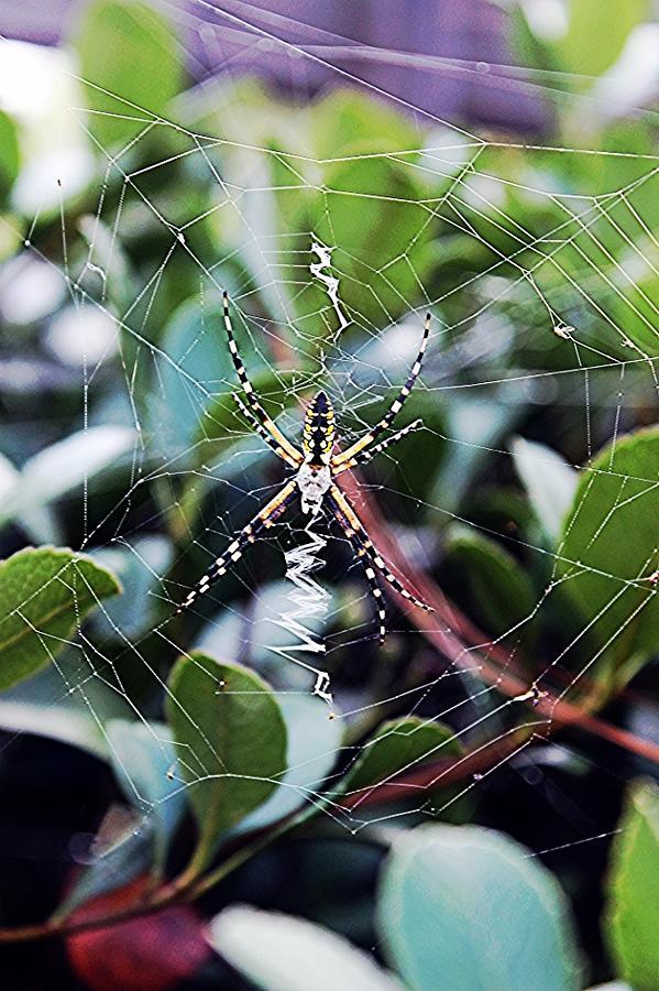 Arachnids Photograph - Charlie by Sarah E Kohara