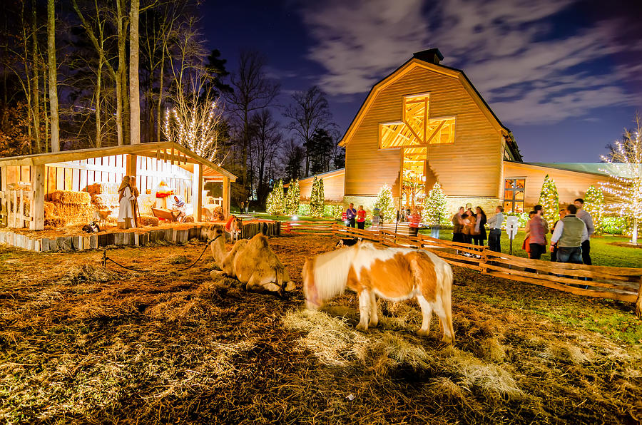 animals photograph charlotte nc christmas celebration at billy graham library by alex grichenko