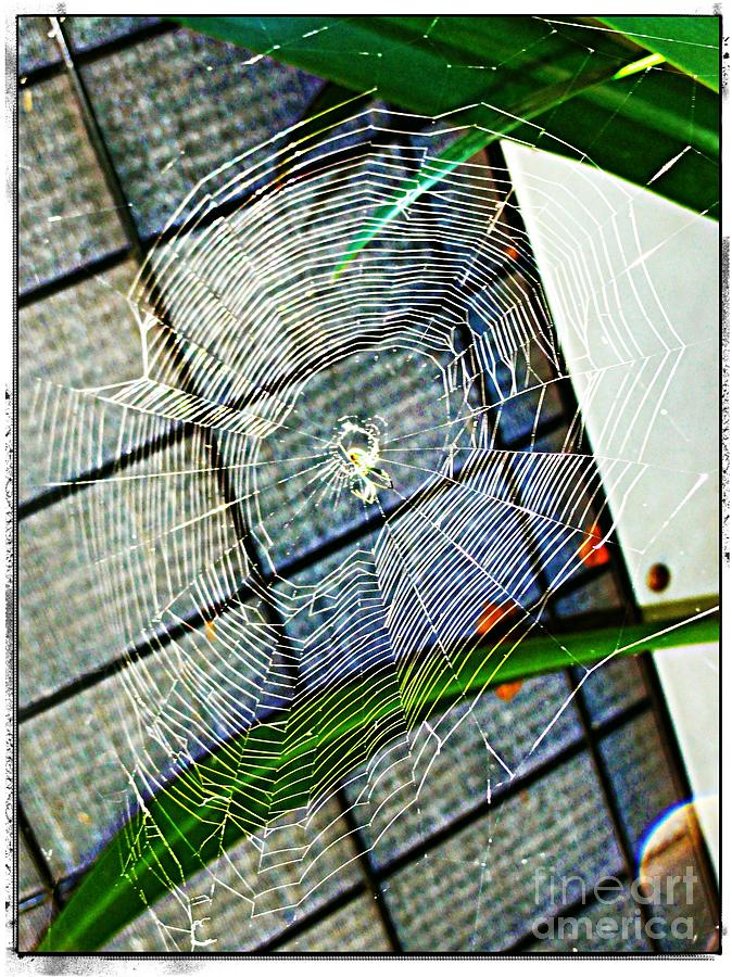 Charlotte Digital Art - Charlottes Web by Meagan Hoelzer