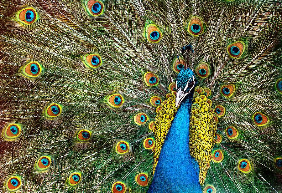 Fauna Photograph - Charming by Ivan Vukelic