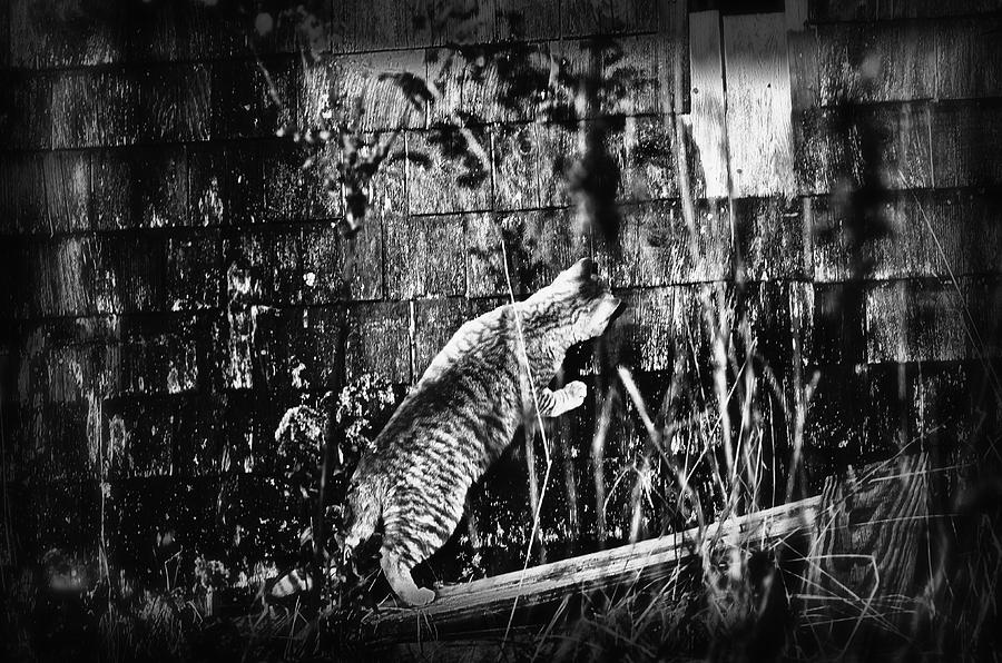 Cat Photograph - Chasing Shadows by Susan Capuano
