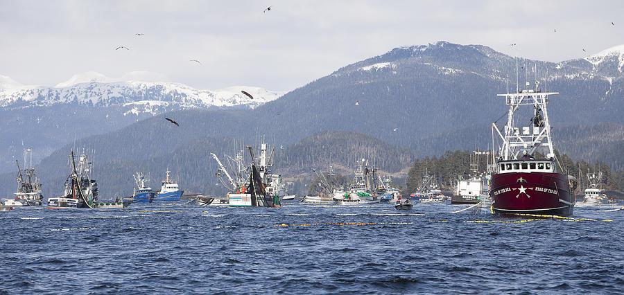 Alaska Photograph - Chasing The Herring by Tim Grams